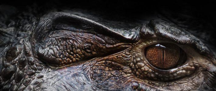 Reptil totem
